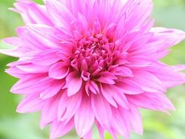 flower3188